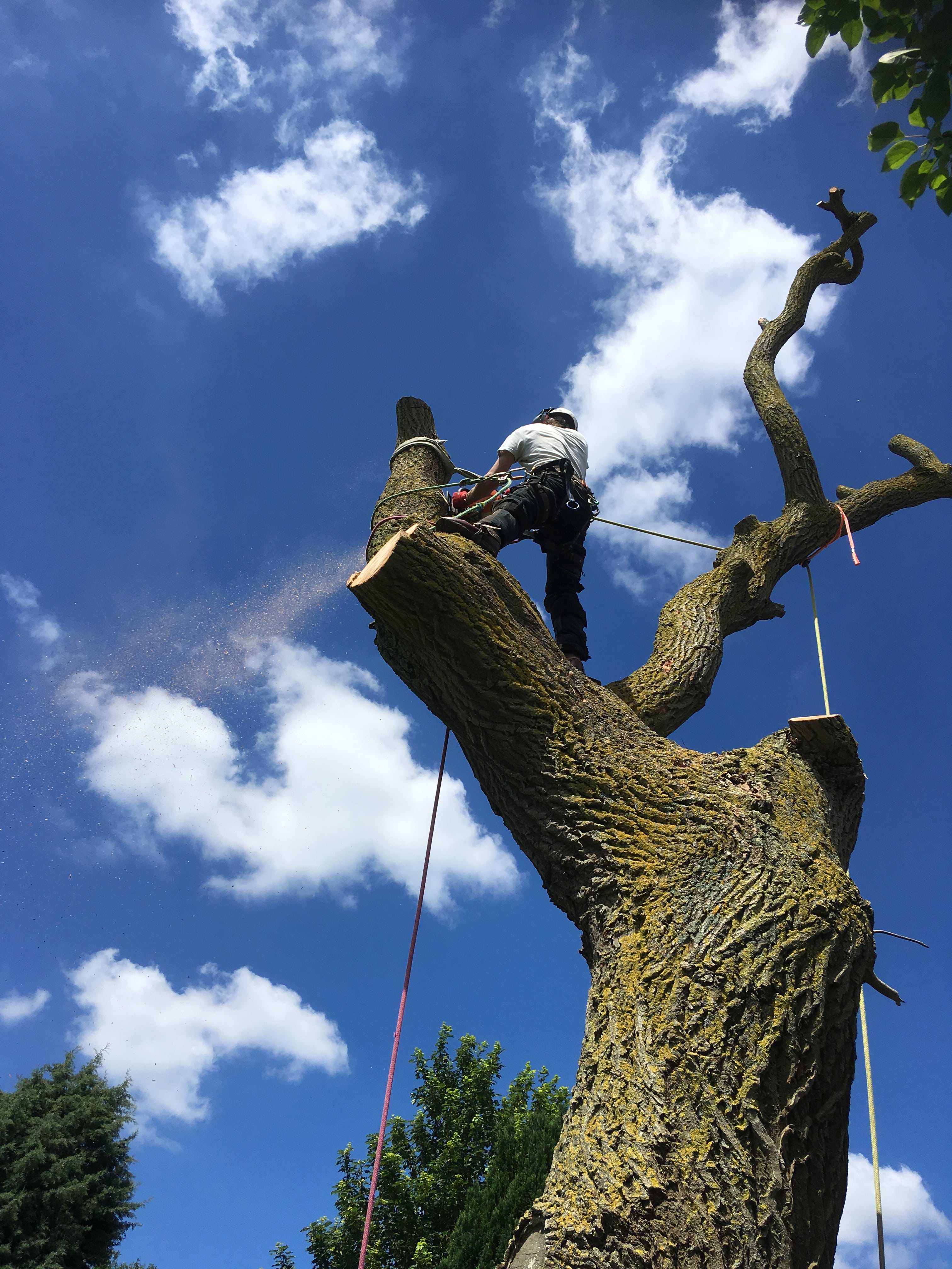 Arborist and Tree Surgeon