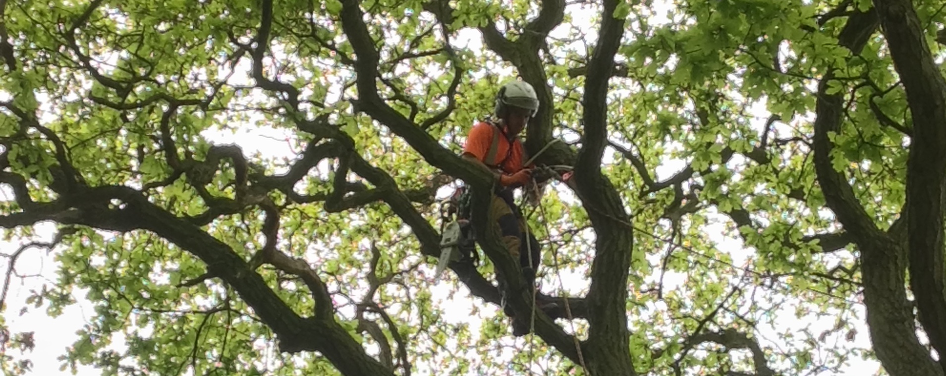 Image of ARB UK Working In Tree Top