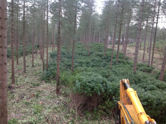 Image Depicting Forestry Mulching in Oxford