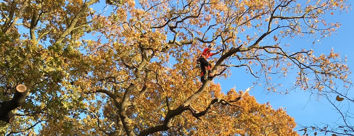 Tree surgery in Oxford