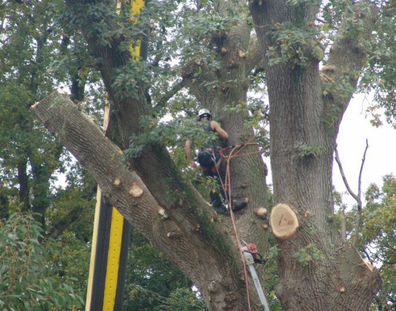 Third Image Depicting Tree Work in Oxford